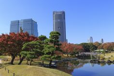 """With its small pond, Hamarikyu Gardens is a literal oasis from the action of the city. Image courtesy of <a href=""""http://www.shutterstock.com/pic-227357536/stock-photo-autumn-leaves-in-hamarikyu-gardens-tokyo.html?src=ttZV0gB50NHBsWOs0knw9A-1-11"""">Shutterstock</a>."""