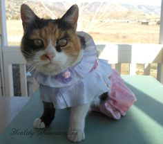 I used to dress up my cat.