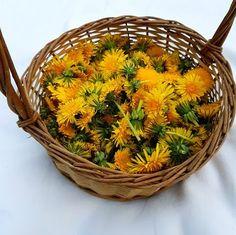 A dziś dla odmiany coś z kwiatków jadalnych, jakimi są nasze pospolite mlecze :)