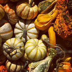 #farmersmarketnyc #gourds #Manhattan Union Square Greenmarket via spoonuniversity on Instagram
