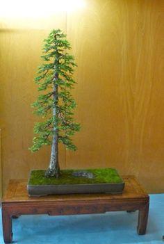 sacramento365.com | 57th Annual Bonsai Show and Sale