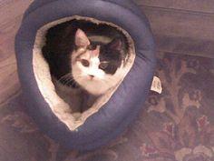 My favorite cat Tasha :)  I love you and miss you xoxo