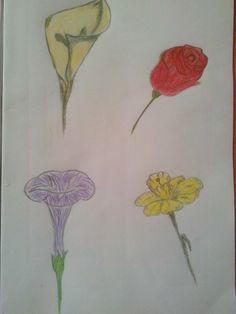 Flowers#drawing#pencil#red#yellow#easy#sketchbook