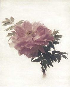 "Flowers in Neutral Moment ""Tree Peony"" Polaroid image transfer 8x10 archival pigment print Photo by Soichi Oshika"