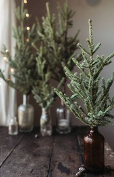Pine branches in old bottles for Christmas decorations. Christmas Time Is Here, Christmas Mood, Country Christmas, Natural Christmas, Simple Christmas, Minimal Christmas, Decoration Table, Xmas Decorations, Tree Branch Decor