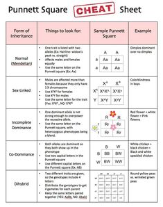 biology lessons Punnett Square Cheat Sheet by Science Lessons That Rock Study Biology, Biology Lessons, Science Biology, Teaching Biology, Life Science, Biology Teacher, Forensic Science, Computer Science, A Level Biology