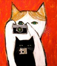 photographie de chat pepeart - Cats in Color - I Love Cats, Crazy Cats, Cool Cats, Art And Illustration, Chat Web, Gatos Cats, Photo Chat, Cat Photography, Arte Pop