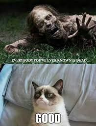 Funny pictures about Grumpy cat during the zombie apocalypse. Oh, and cool pics about Grumpy cat during the zombie apocalypse. Also, Grumpy cat during the zombie apocalypse. Gato Grumpy, Grumpy Cat Meme, Grumpy Cat Quotes, Cat Memes, Grumpy Kitty, The Walking Dead, Walking Dead Memes, Cute Cats, Funny Cats