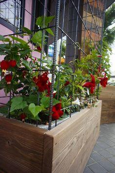 その後のとくしげ歯科さんの春の花壇の様子 名古屋市緑区 とくしげ歯科様