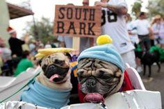 cosplay-pugs:South park pugs