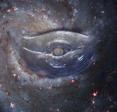 ojo de la ballena