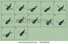 cartoon vector robber-fly animation fly. Game icon funny flying insect. Vector design for app user interface.