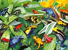 Friendly Frogs Jigsaw Puzzle | PuzzleWarehouse.com