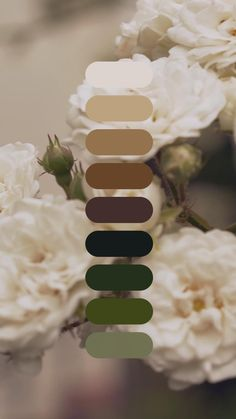 Beautiful white roses blooming on bush with green leaves Color Schemes Colour Palettes, Nature Color Palette, Bedroom Color Schemes, Colour Pallete, Color Combos, Palette Pantone, Blooming Rose, Color Harmony, Aesthetic Food