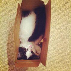 Cat in a box.