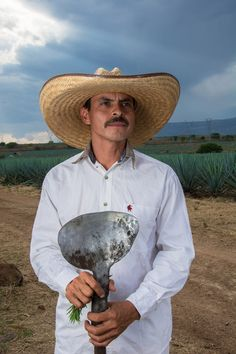 Tequila Fun Facts | Mezcal Facts 6 Tequila Facts That Say it Like it is  That magical day where North Americans all use a minor Mexican holiday as an excuse to gather around and drink margaritas has once again arrived! Here's a rundown of six quick Tequila facts that will sparkle your conversations.   #1 Those idyllic shots of the tequila harvest? Actually none of the work is that clean First luxuriate in this shot: You see these endless horizons of blue agave plants throughout the high and ...