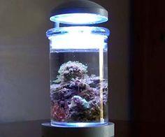 Nano Aquarium, Marine Aquarium, Reef Aquarium, Aquarium Ideas, Salt Water Fish, Salt And Water, Fresh Water, Saltwater Tank, Saltwater Aquarium