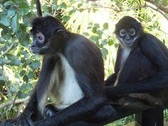Sandos Caracol Eco Resort (Riviera Maya/Playa del Carmen, Mexique) : voir 967 avis et 11 522 photos