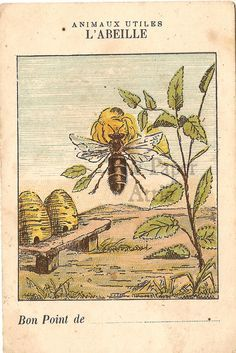 would be great embroidery project - Bee Beehives Antique French Natural History Chromo Card I Love Bees, Birds And The Bees, Upcycling Fashion, Illustrations Vintage, Buzz Bee, Bee Skep, Vintage Bee, Bee Art, Bee Happy