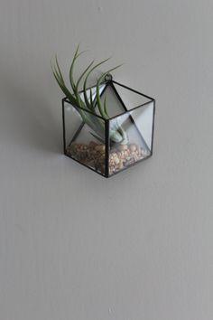Small Hanging Terrar