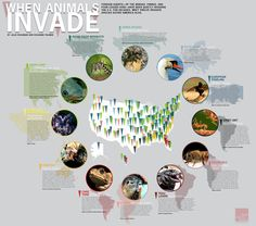 Invasive Species - one of a set of pretty cool science-related infographics. DONE