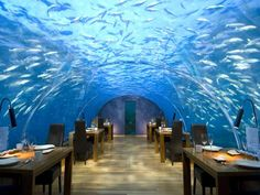 To go with the under water hotel room, here's the matching under water restaurant at Conrad Hotel in the Maldives. I think seafood is on the menu. -NN