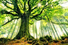 Brocéliande forest in Bretagne, France