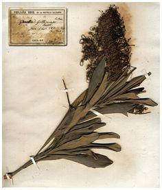 "workman: "" wasbella102: Herbier. 1860s. France. """