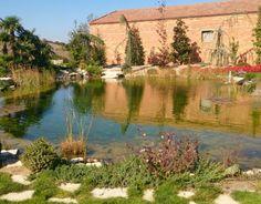 Piscinas ecol gicas construcci n estanques y cascadas for Piscinas naturales urederra