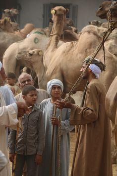 Birqash Camel Market (Souq al-Gamaal), Egypt.