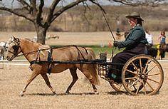 Miniature Horse CDE Show Harness-MWCDE-www.ozarkcanada.com