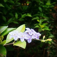 #flowers #latehartourism #govindpathak
