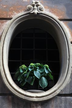 Monti, mein Lieblingsquartier in Roma Restaurant, Plants, Couple, Rome, Tips, Diner Restaurant, Restaurants, Flora, Plant