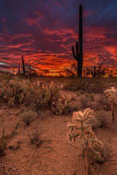 Tucson, Arizona - Photograph Saguaro National Park by Thomas McEwen on 500px