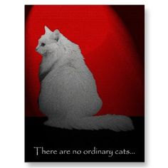 No Ordinary Cat Postcard from Art and Soul: Poster Art and Greeting Cards