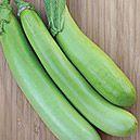 Eggplant, Louisiana Long Green