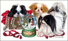 """Japanese Chin Christmas cards are 8 1/2"""" x 5 1/2"""" and come in packages of 12 cards. One design per package. All designs include envelopes, your personal message, and choice of greeting. Select the greeting of your choice from the drop-down menu above. Add your personal message to the Comments box during checkout."""