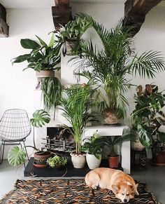 plants & corgi