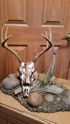 Whitetail European mount on a reproduction skull. I would use white and brown spray paint for dip technique Deer Skull Decor, Deer Hunting Decor, Deer Skulls, Animal Skulls, Hunting Stuff, Hunting Trips, Deer Art, Deer Mount Decor, Taxidermy Decor