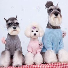 Loose Fitting Sweater for Adorable Dog Fashion & Online Pet Clothes Store
