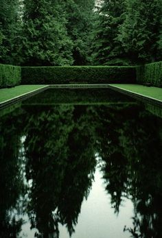 black bottom pool, privet hedge, surrounded by old growth evergreens