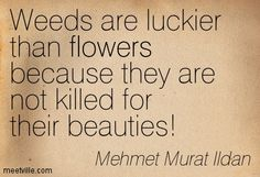 Weeds are luckier than flowers because they are not killed for their beauties! Mehmet Murat Ildan