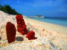 THE GREAT SANTA CRUZ ISLAND: A Pink Sand Beach in the Philippines | I AM A TRAVELER