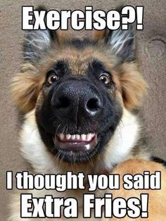 Funny Animal Pictures with Captions Source by lindyoh dog dog memes dog videos videos wallpaper dog memes dog quotes dogs dogs pictures dogs videos puppies puppy video Funny Animals With Captions, Funny Animal Jokes, Funny Dog Memes, Really Funny Memes, Cute Funny Animals, Funny Shit, Animal Captions, Funny Dog Sayings, Funny Dog Pics