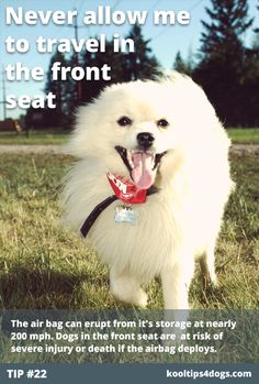 Never allow your dog to travel in the front seat. The air bag can erupt from it's storage at nearly 200 mph. Dogs in the front seat are  at risk of severe injury or death if the airbag deploys.  www.koolcollar4dogs.com