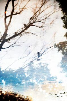 Yoshinori Mizutani   水谷吉法