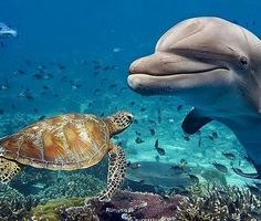 @turtle #dolphins #dolphinswim #dolphin #dolphinshow #dolphine #dolphines…""