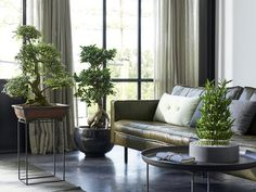 Bonsai i szczęśliwy bambus Indoor Trees, Indoor Plants, Outdoor Sofa, Outdoor Furniture Sets, Outdoor Decor, Ficus Ginseng, Rose Bush Care, Evergreen Groundcover, Hardy Perennials