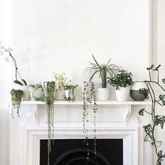 houseplants on white mantle over black fireplace. / sfgirlbybay
