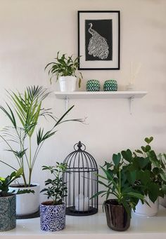 Decorating with plants. How to decorate your home using different kinds of plants #homedecor #ideas